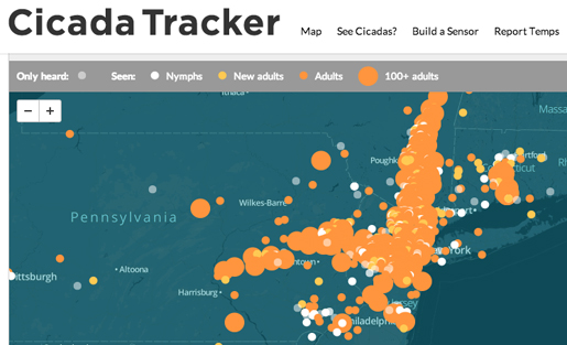 cicada tracker wnyc