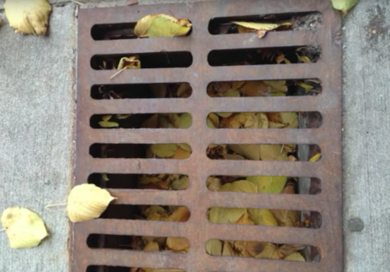 If leaves are carried through a storm drain, they will add phosphorus to the area's lakes. Photo by UW-Madison student Cassie Sterwald.