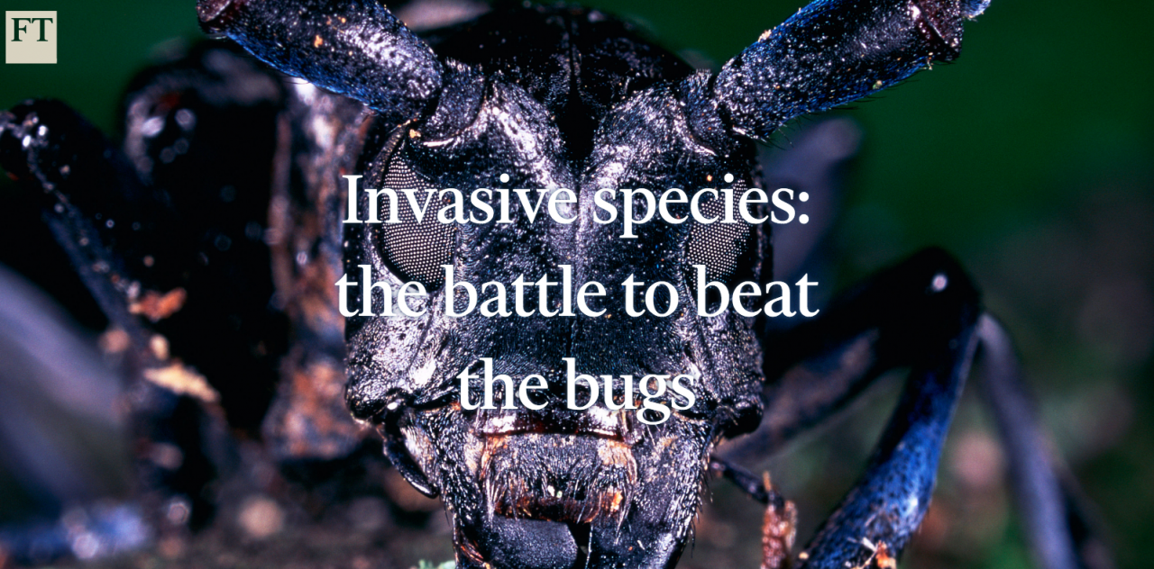 A screenshot from the Financial Times' interactive feature on invasive species.