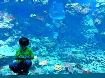 http://www.pbs.org/mediashift/kid_handheld_flickr_mezzoblue