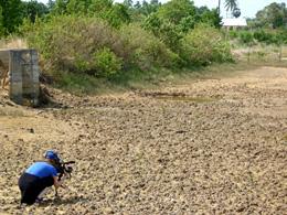 i-55e2446f812afa8acd1fb97a21d983fb-mangrove.jpg