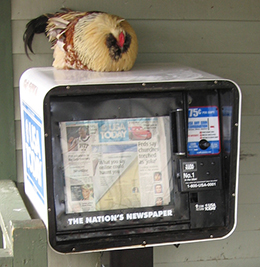 i-5e218899098b63de001e36056c39805c-chicken on usatoday.jpg