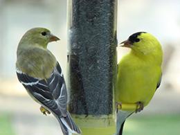 i-7b160bd251a0d7145981e5b7bfc615ae-birds.jpg