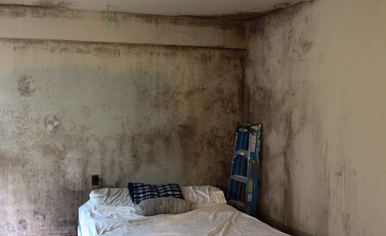 A studio apartment, owned by the New York City Public Housing Authority, is overrun with mold. Photo by María Villaseñor.